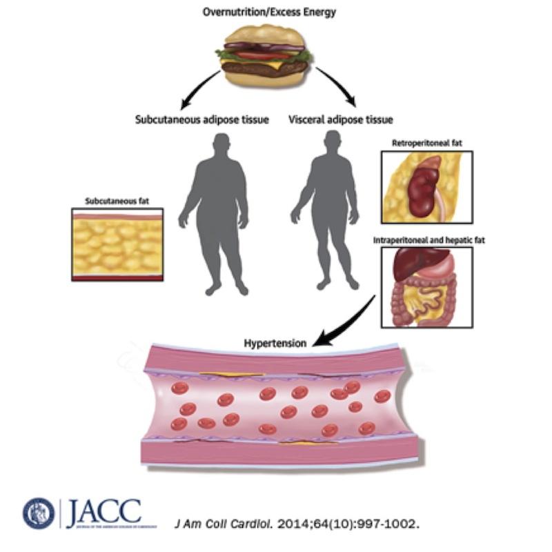 SAC | Sociedad Argentina de Cardiología Obesidad e