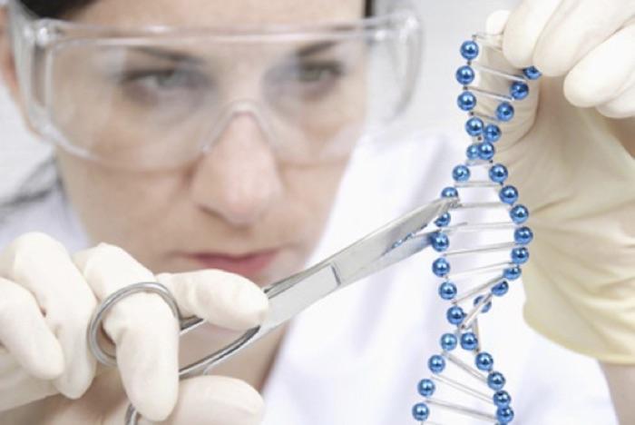 Corrigen gen de la miocardiopatía hipertrófica en embriones humanos